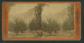 Lamon's Orchard, Yosemite. The First settler, from Robert N. Dennis collection of stereoscopic views.png