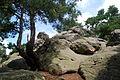 Landschaftsschutzgebiet Harz und Vorländer - Teufelsmauer bei Timmenrode (8).JPG