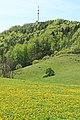 Landschaftsschutzgebiet Kulm in Thüringen 2H1A5540WI.jpg
