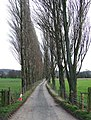 Lane from Lawton Farm, Shropshire - geograph.org.uk - 677745.jpg