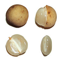 Lansium parasiticum - Wikipedia, the free encyclopedia