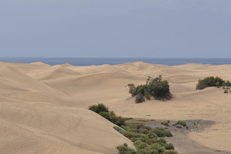 Уникальные песчаные дюны Маспаломас возвратились к первозданному состоянию спустя 50 лет