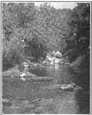 Laurel Run, Pennsylvania - An old image of Laurel Run, a creek in the community.