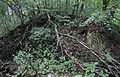 Leśny Dwór - ruiny osady.JPG