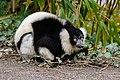 Lemur (26992589088).jpg