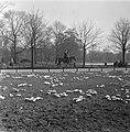 Lenteplaatjes. Crocussen in Vondelpark, Bestanddeelnr 905-6077.jpg