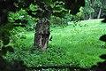 Leszállás - panoramio (1).jpg