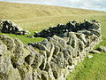 Lichen covered old dyke, Sothers, Hermaness, Unst - geograph.org.uk - 116642.jpg