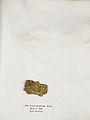 Lichenes Helvetici IX X 1833 019.jpg