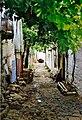 Lin Alley.jpg