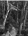 Linda Path, Leura (2713170444).jpg