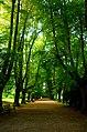 Lindenallee im Rombergpark 2014b.jpg