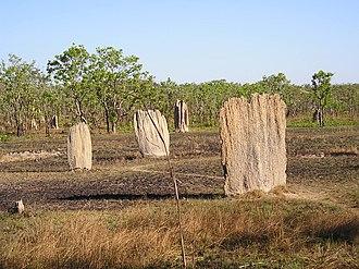 Litchfield National Park - Termite mounds