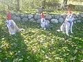 Living Canine Garden Gnomes.jpg