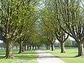 Llandaff Fields path.JPG