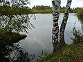 Lomonosovsky District, Leningrad Oblast, Russia - panoramio - sokol336 (3).jpg