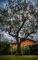 Lonley Tree (36700400).jpeg