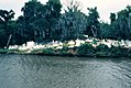 Louisiana - Bayou Barataria - St. Berthoud Cemetery - Jean Lafitte, LA - September 1972.jpg