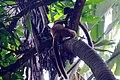 MG-naturpark-lemuren.jpg