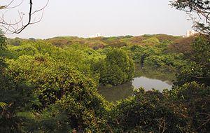 Mangalavanam Bird Sanctuary - Image: Mangalavanam