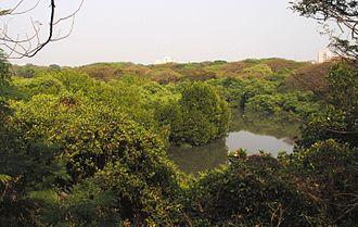 Ernakulam - Mangalavanam Bird Sanctuary