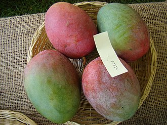 Alice (mango) - Display of 'Alice' mangoes at the Redland Summer Fruit Festival held at the Fruit and Spice Park in Homestead, Florida on 21 June 2008.
