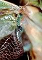 Mantis7.jpg