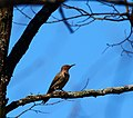 Many Types of birds that can be seen from the New River Trail. (27653683996).jpg