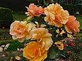 Many roses by puke.jpg