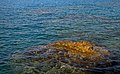 Mediterranean Sea at sunset. Rhodes, Greece.jpg