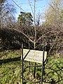 Memorial tree (geograph 4377165).jpg