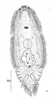 Oncomiracidium a type of larvae