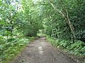 Mid section of footpath from the Devil's Punchbowl Café to Beacon Hill - geograph.org.uk - 932420.jpg