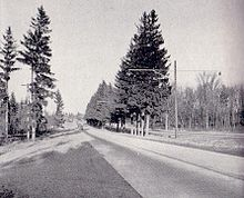 """A black and white photo of a rural area. A divided road (divided by a grass centre with trees) is paved and runs from the right into the background, with several cars visible in the distance. Several tall conifers dominate the foreground."""