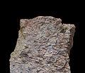 Migmatite des Trois-Epis-Musée d'histoire naturelle et d'ethnographie de Colmar.jpg