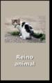 Miniatura - Reino animal.png