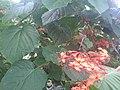 Monarch butterfly Mariposario de Benalmádena-Butterfly Park.jpg