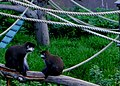 Monkeying around (14885294152).jpg