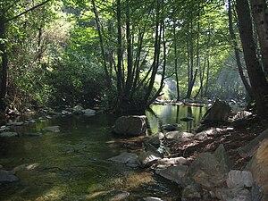 Vista del riu Tordera, eix central del massís del Montseny
