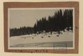 Moose, near Prince George, British Columbia (HS85-10-41526) original.tif