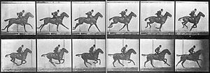 Muybridge horse gallop.jpg
