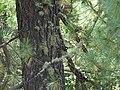 Mycorrhiza WTK-DSC00247.jpg