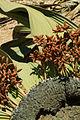 N-welwitschia-3.jpg