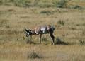 NRCSMT01052 - Montana (4953)(NRCS Photo Gallery).tif