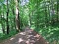 NSG-Lange Bäume 4.jpg