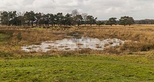 Flooded grasslands and savannas - The Pantanal: ground view
