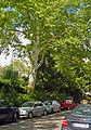 Naturdenkmal 418.jpg