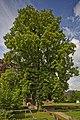 Naturdenkmal Zwei Alte Linden, Kennung 82350800009, Schloßruine, Wildberg 04.jpg