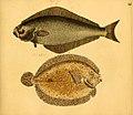 Naturgeschichte in Bildern mit erläuterndem Text (Taf. LI) (6059212632).jpg
