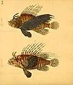 Naturgeschichte in Bildern mit erläuterndem Text (Taf. XLIV) (6058663597).jpg